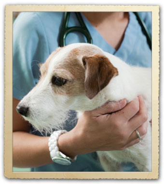 Pet Wellness Services at Park Hills Animal Hospital & Wellness Center